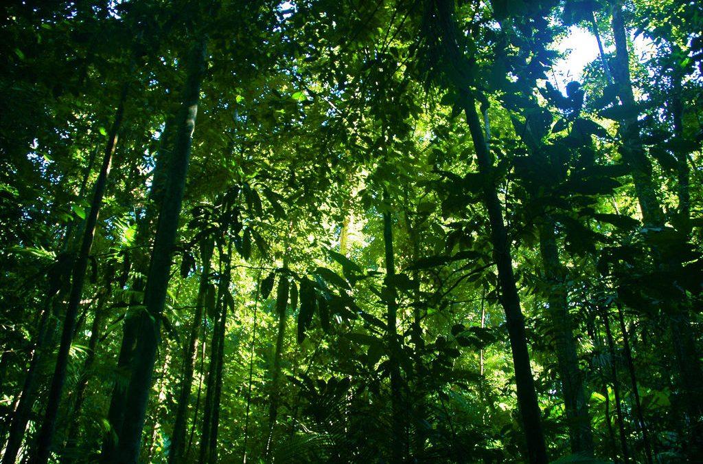 Alles is biodiversiteit